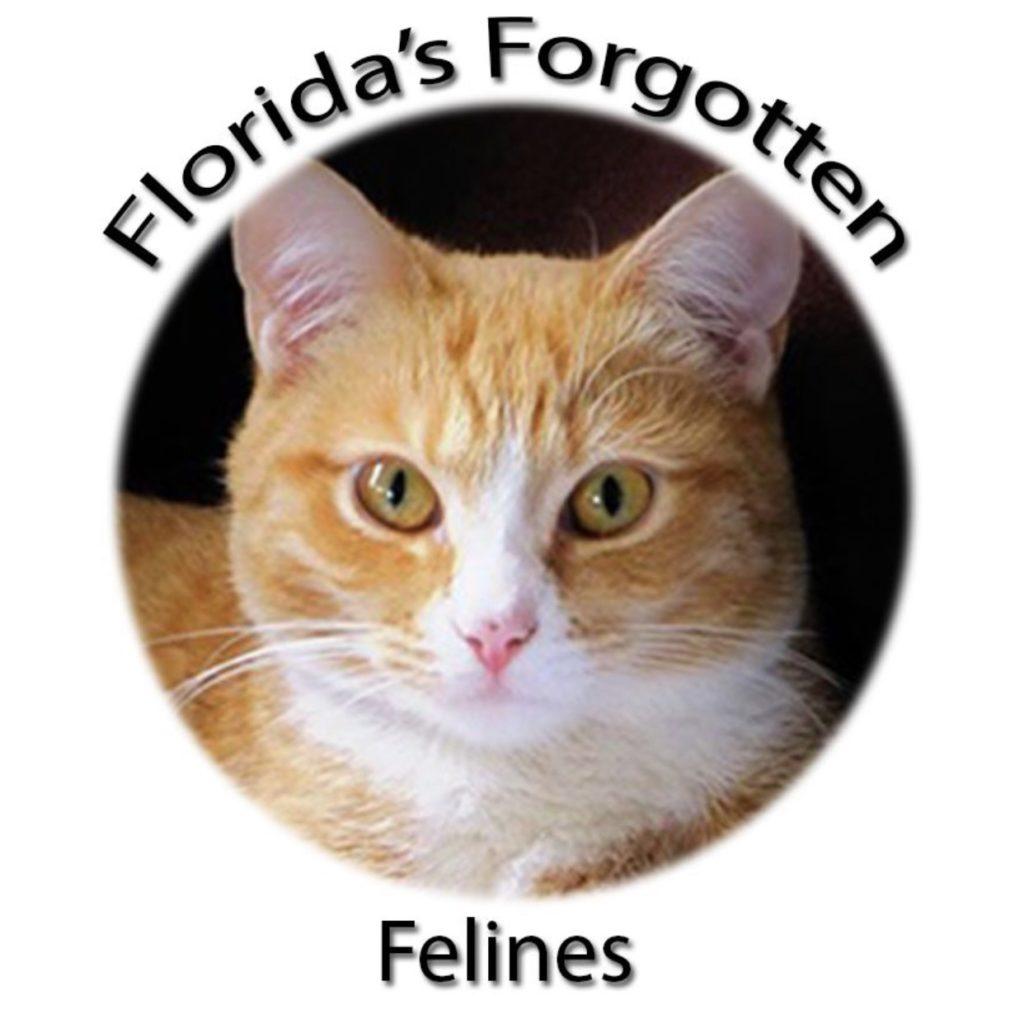 Florida's Forgotten Felines